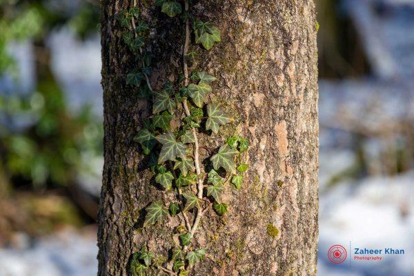 Zaheer-Khan-Photography-nature-